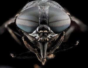 Blinde fluer er en anden betegnelse for klæger